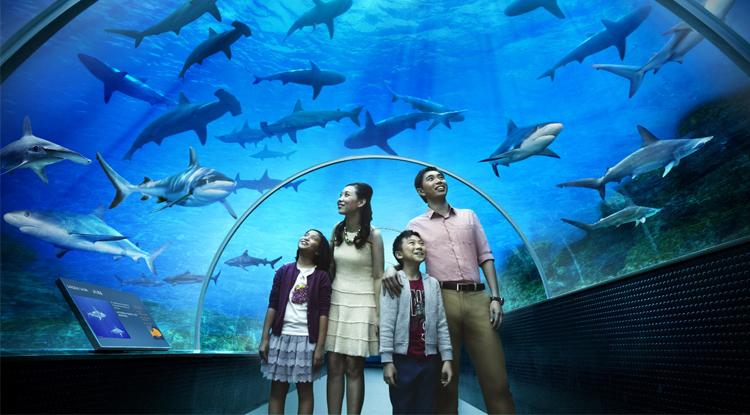 The Oceanarium «Ailand»